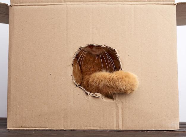 Rode volwassen kat stak zijn poot in een rond gat in een bruine kartonnen doos