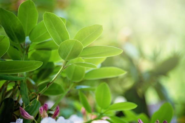 Rododendronknop en groene bladeren in de lente