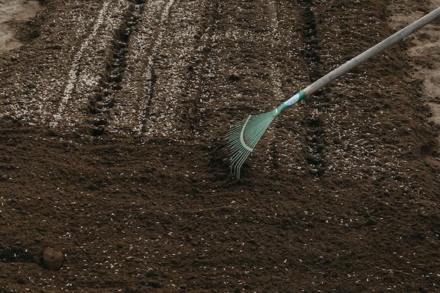 Rogge graan wordt tijdens het zaaien op de grond van de site geplant