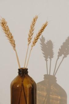 Rogge tarwe oor stengels in ouderwetse fles tegen witte muur met zonlicht schaduwen. minimalistisch interieur