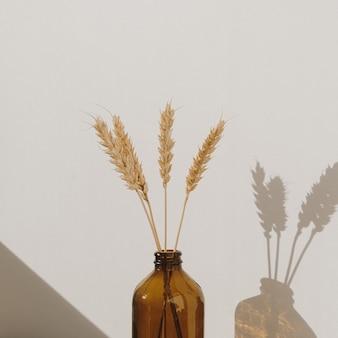 Rogge-tarwe-oorstengels in stijlvolle fles. warme schaduwen op de muur. silhouet in zonlicht. minimale interieurdecoratie