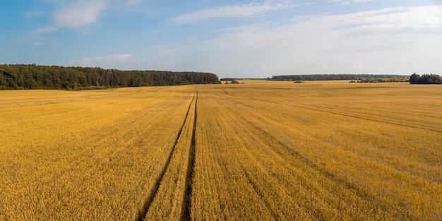 Roggeveld op het platteland