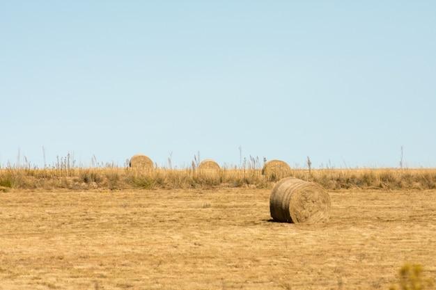 Rollen of balen hooi in een uitgestrekt open veld