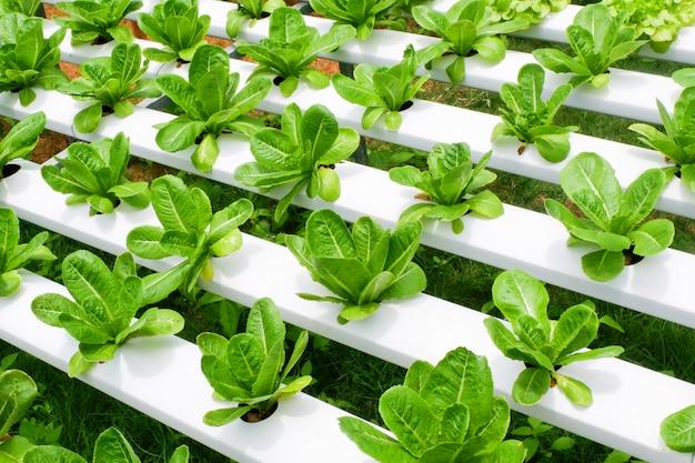Romaine sla plantaardig hydrocultuur systeem boerderij planten op water zonder bodem landbouw voor gezonde voeding