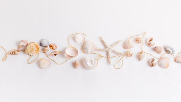 Romantische compositie van exotische schelpen, oester, zeester op witte achtergrond. tropische zomervakantie of verjaardag, trouwdag concept. plat lag, bovenaanzicht. maritiem ontwerp.