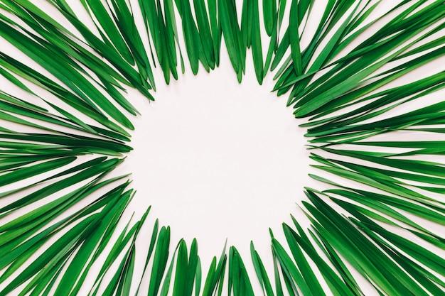 Rond frame gemaakt van groene bladeren van narcissen op wit