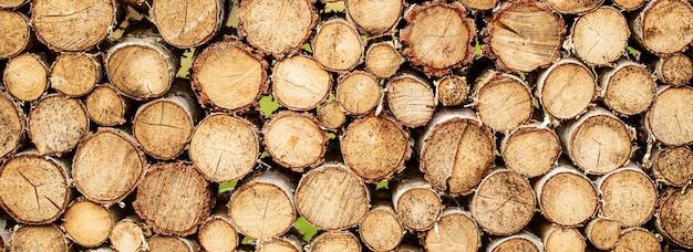 Rond teakhout bomen cirkel stronken gesneden groep. ontbossing Premium Foto