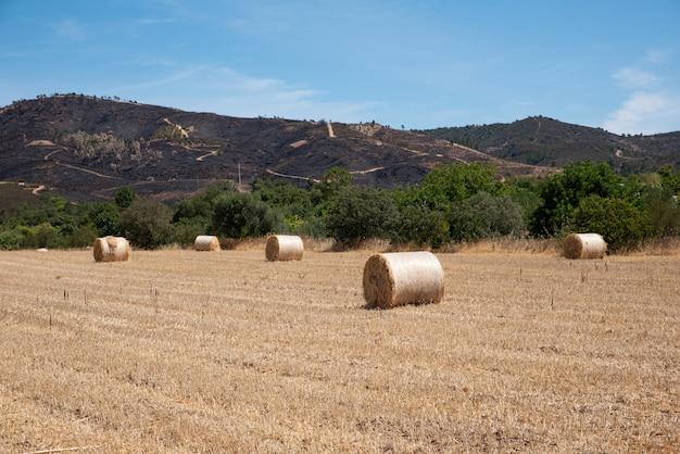 Ronde balen hooi op droog gras achtergrond