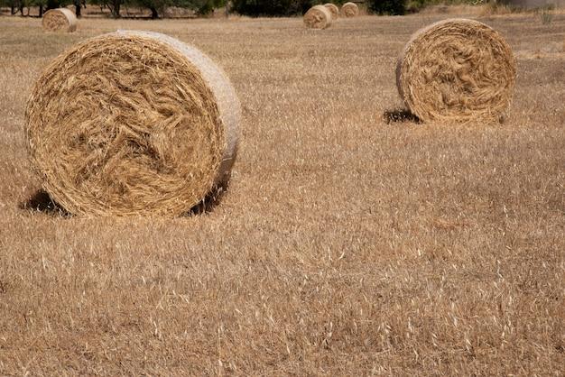 Ronde balen hooi op droog gras