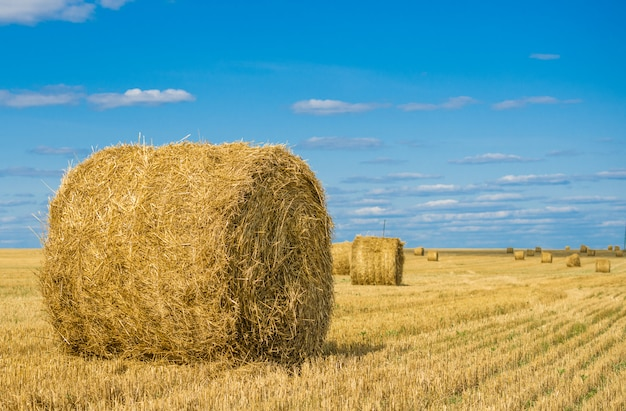 Ronde hooiberg in een veld, onder een blauwe hemel