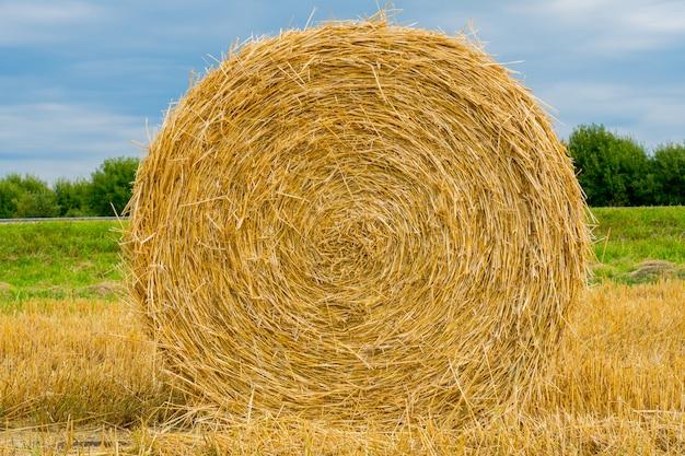 Ronde stapels stro in het veld.