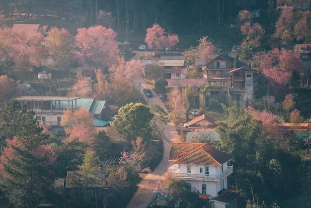 Rong kla village en sakura tree bij zonsopgang in phu hin rong kla national park, provincie phitsanulok, thailand