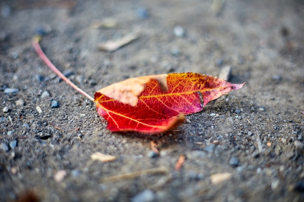 Rood en geel blad