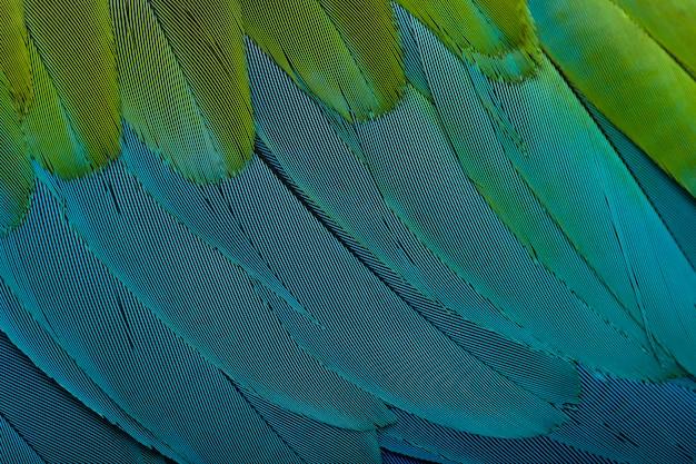Rood-en-groene ara, close-up op veren