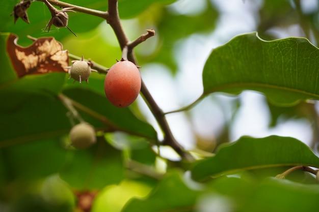 Rood fruit op boom afbeelding hd