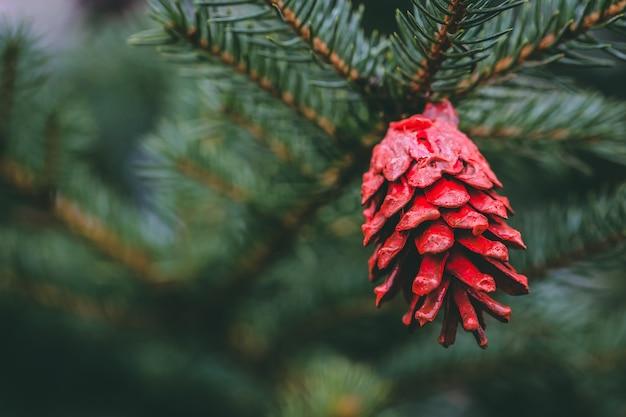 Rood geschilderde dennenappel op kerstboom.