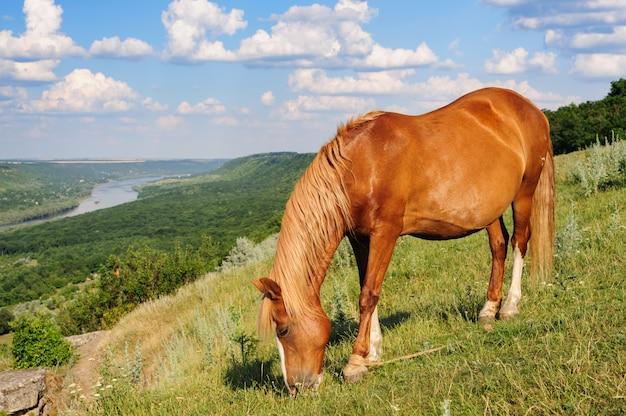 Rood paard dat bij weide weidt