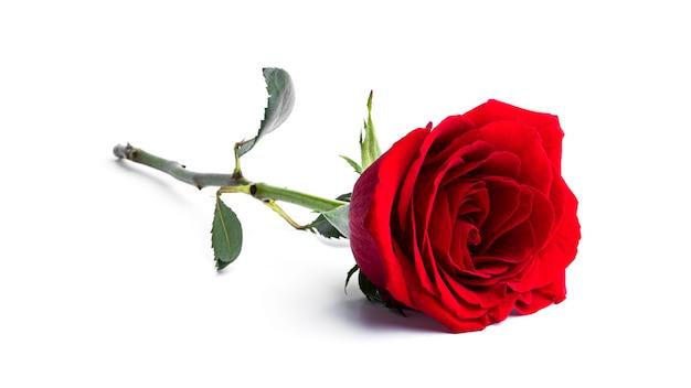 Rood roze bloem geïsoleerd op een wit oppervlak