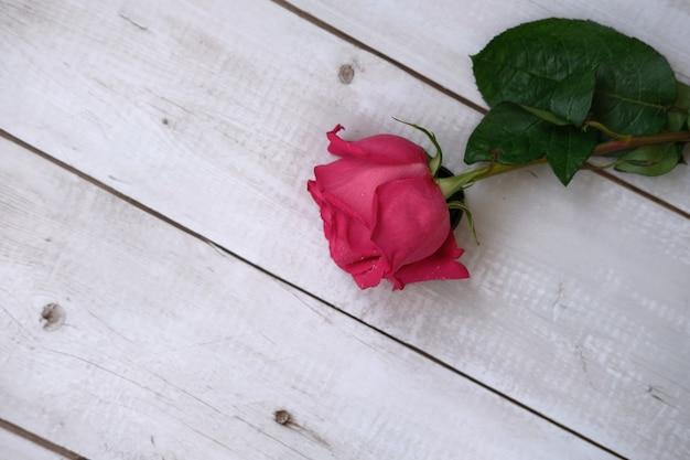 Rood roze rozen