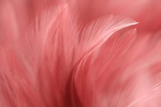 Rood vervagen veren textuur voor achtergrond