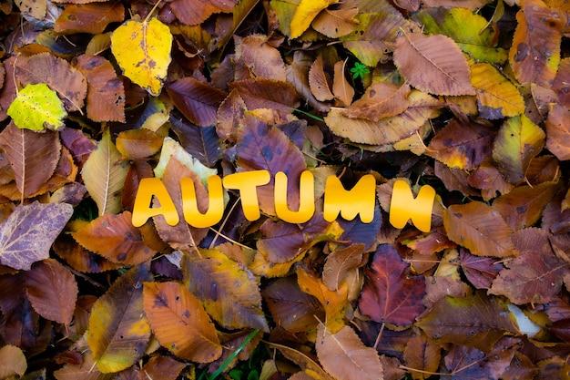 Roodbruine bruine bladeren op de grond met de woordherfstachtergrond