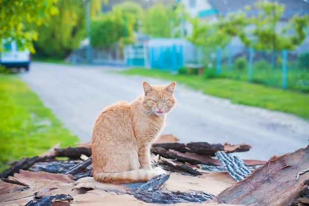 Roodharige kattenzitting op de zomerhout
