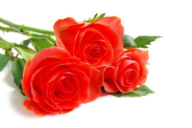 Roos geïsoleerd op witte achtergrond