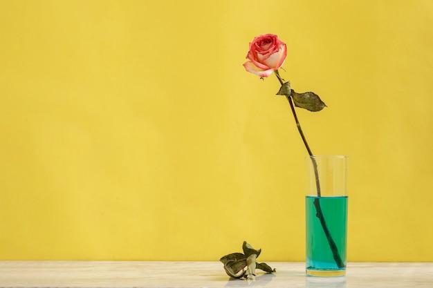 Roos in een glas met blauw water en een gele achtergrond