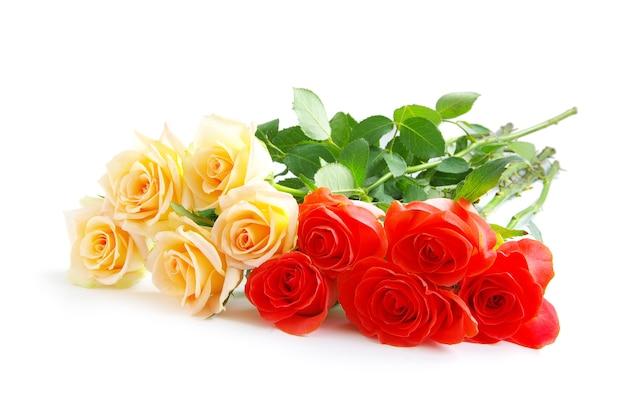 Rose geïsoleerd op wit