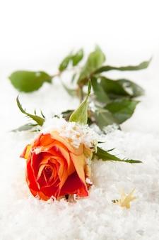 Rose in de sneeuw