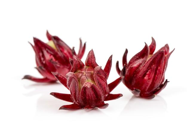 Rosella of hibiscus sabdariffa geïsoleerd op een witte achtergrond.
