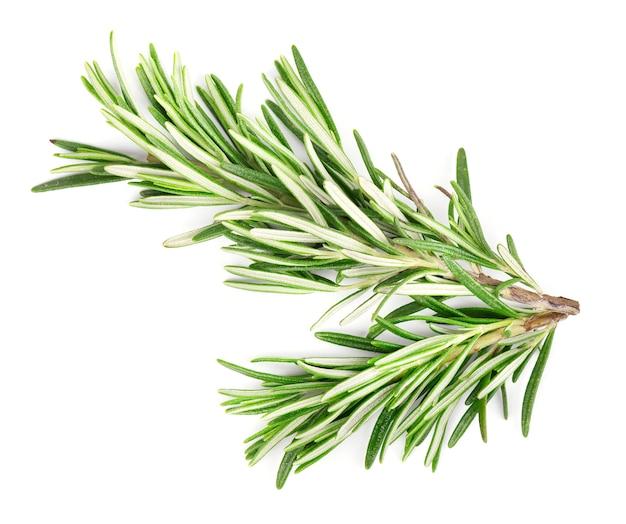 Rosemary isoleerde op witte achtergrond