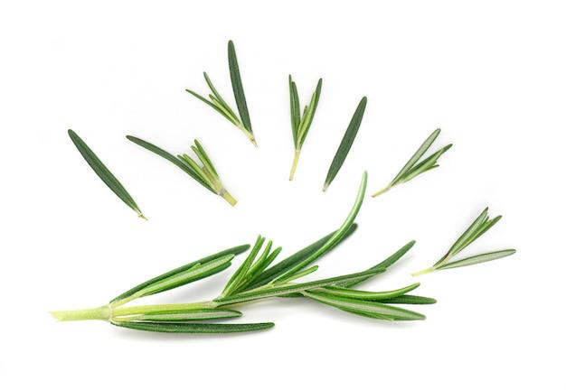 Rosemary, rosemary twig en geïsoleerde bladeren