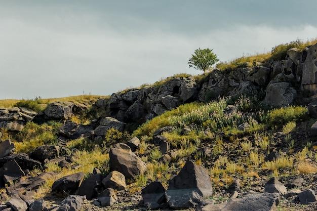 Rotsachtig landschap vanuit een lage hoek met een enkele boom en wolken in de zomer