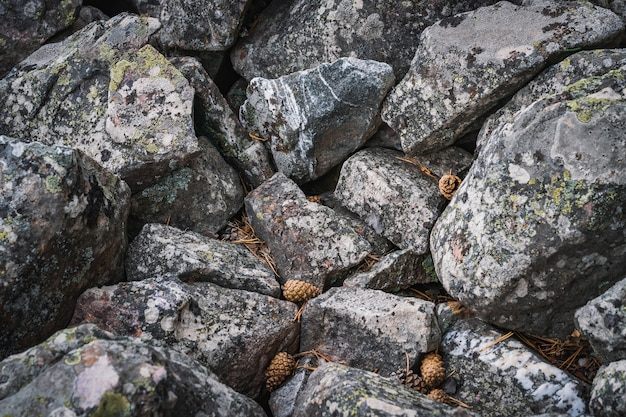 Rotsachtige grond van grote kwartsietstenen