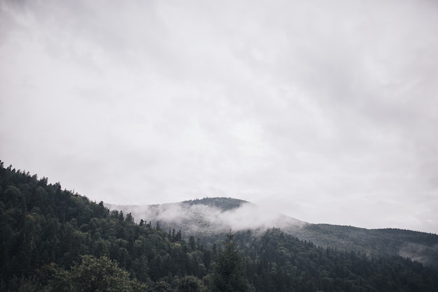 Rotsachtige hoge bergen. bosmist gelegd op de toppen van de bomen weer bergen. betrokken berghelling en groenblijvende boomlandschap.