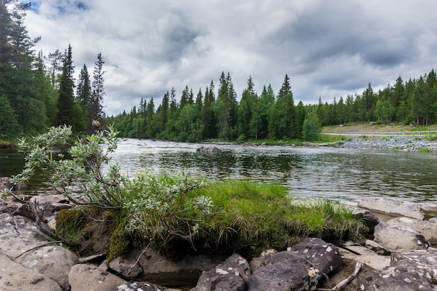 Rotsachtige kust en groene sparren op ljungan rivier, jamtland county, zweden