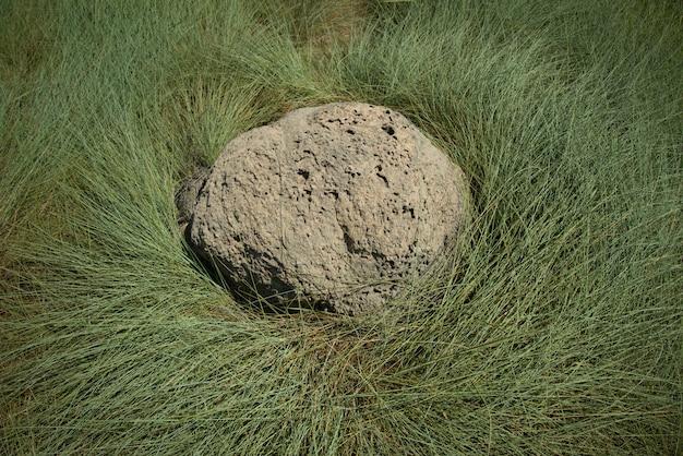 Rotsachtige mierenhoop of mierenkolonie omgeven door groen gras