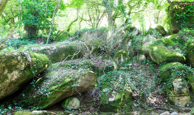 Rotsen in het bos