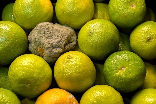 Rotte limoen met schimmel. verwende citrusverpakkingen.