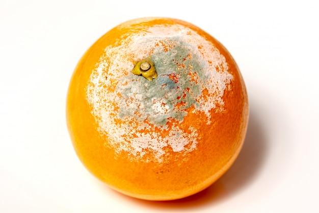 Rotte sinaasappel op de witte achtergrond