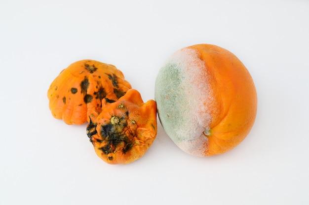 Rotte sinaasappelen op wit