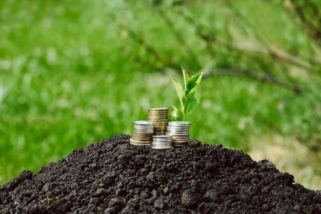 Rouleau, het symbool van groei en accumulatie