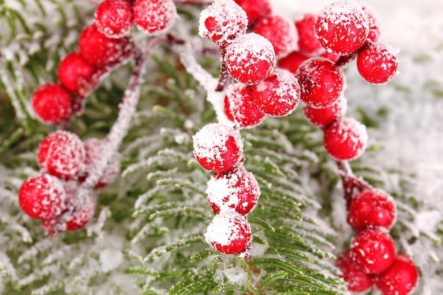 Rowan bessen met sparren bedekt met sneeuw