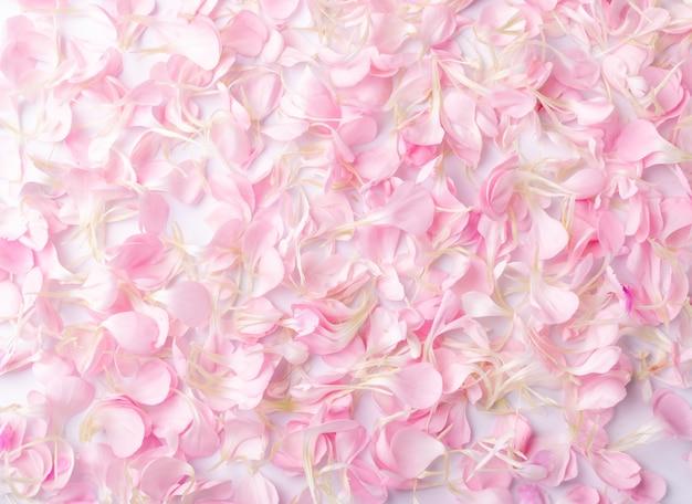 Roze anjerbloemblaadjes, bloem vlokken textuur achtergrond bovenaanzicht.