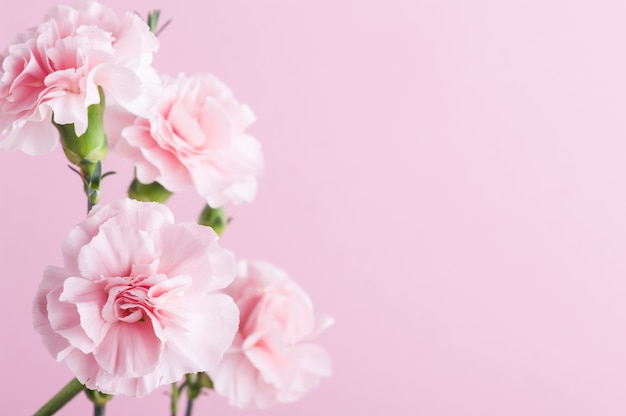 Roze anjers op achtergrond