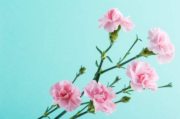 Roze anjers op mint groene achtergrond