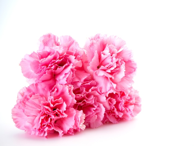 Roze anjersbloem voor moederdag
