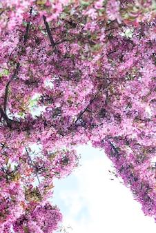 Roze appelboom bloemen met blauwe hemelachtergrond