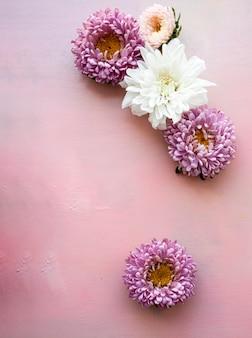 Roze asterbloemen en witte chrysantenbloemen liggen op een roze houten achtergrond. plaats voor tekst.